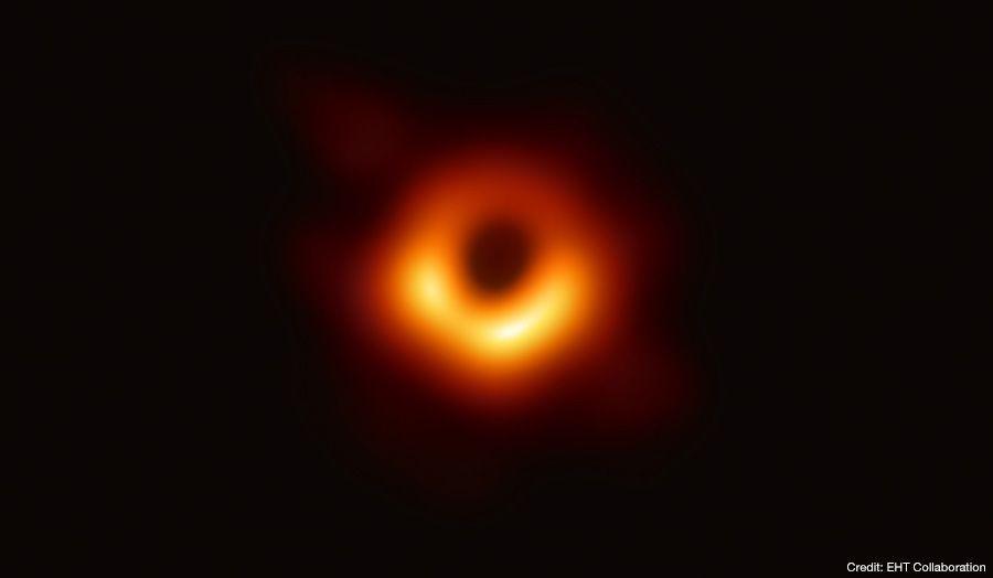 foto gaura neagra